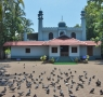 cheraman-mosque-with-pigeons
