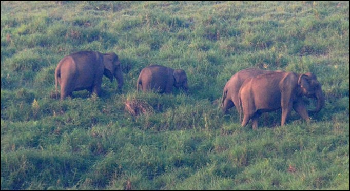 Gavi elephant herd spotted during jeep safari